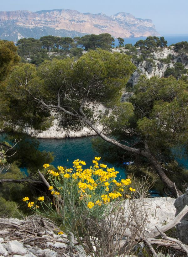 Field-trip_Vertical-Garden-Design_France_Calanques_3.jpg