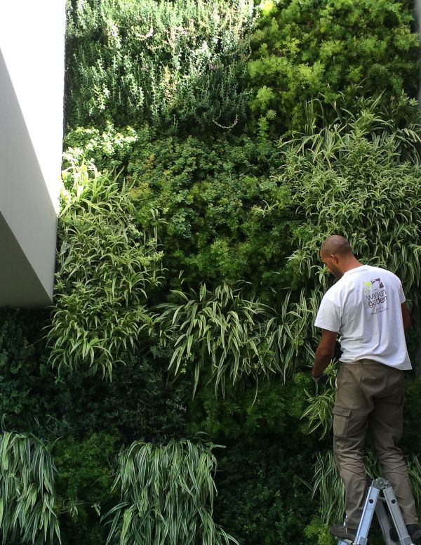 Vertical garden_trimming.jpg